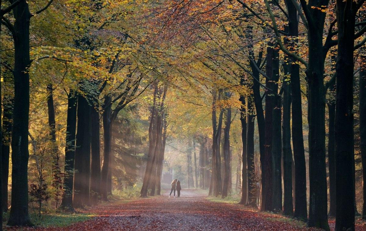 Wandelen Lage Vuursche: Wandelroutes op de Heuvelrug