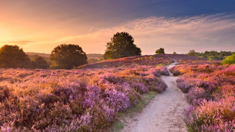 Wandelen Nunspeet: Veluwe wandelroutes