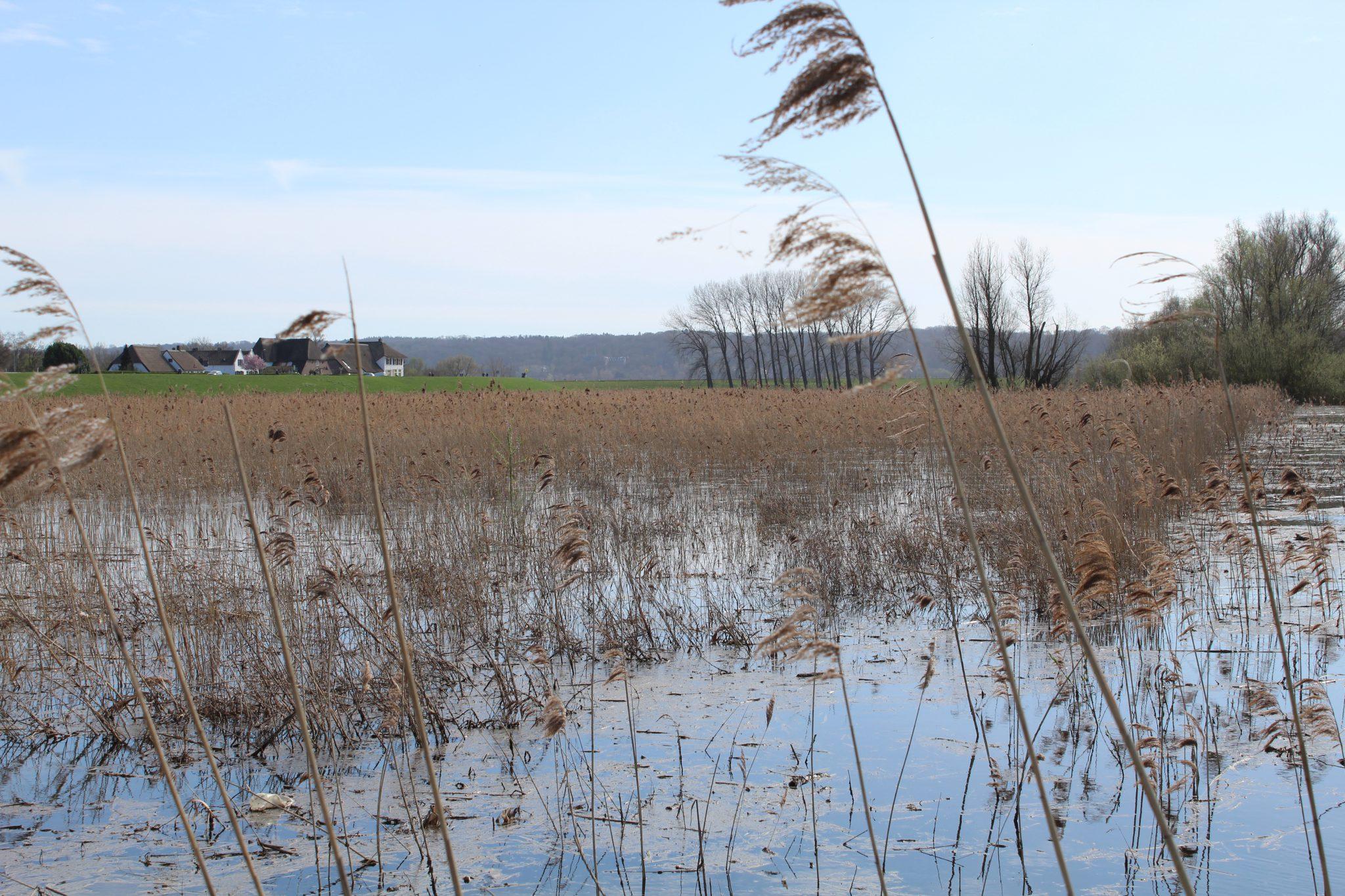 Wandelen in Groesbeek