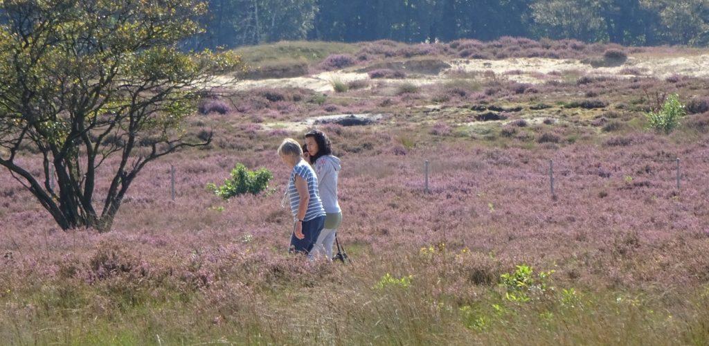 Wandelen Hilversum over de Heide
